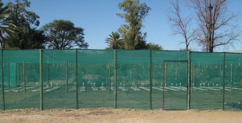 plants growing in mesh protection